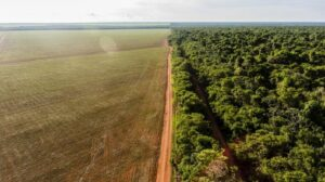 Soybean farms surrounded the Wawi Indigenous Territory in the Southeast Amazon. Rogério Assis/ Instituto Socioambiental, Author provided