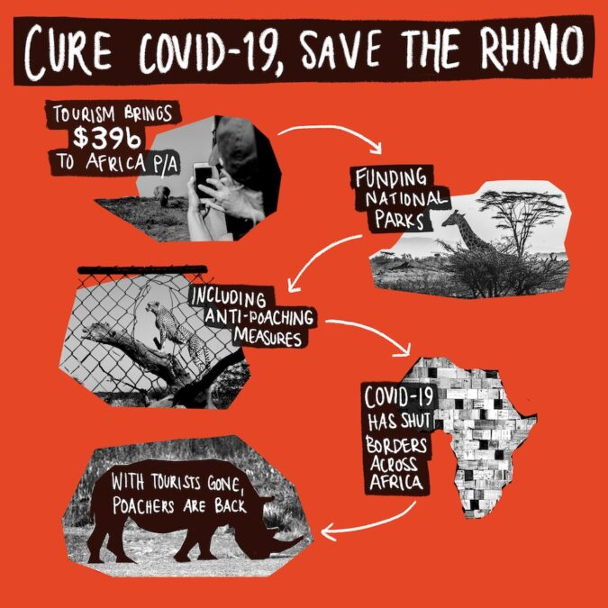 Infographic: cure COVID-19, save the rhino. Tourism brings $39 billion to Africa p/a, funding national parks, including anti-poaching measures. COVID-19 has shut borders across Africa, and with tourists gone poachers are back.